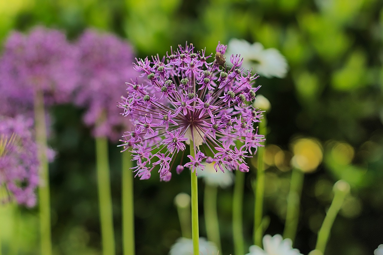 Seeds bulbs plants quirky ornaments outdoor gardenalia for Quirky ornaments uk