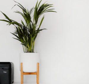 houseplant-v2